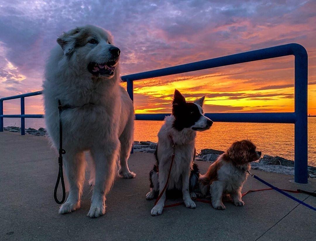 dog trio.jpg