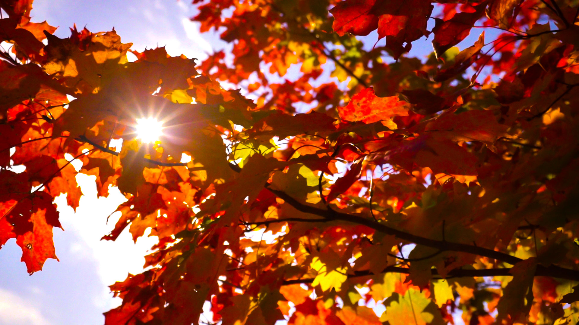 sunburst-leaves-focus (1).jpg